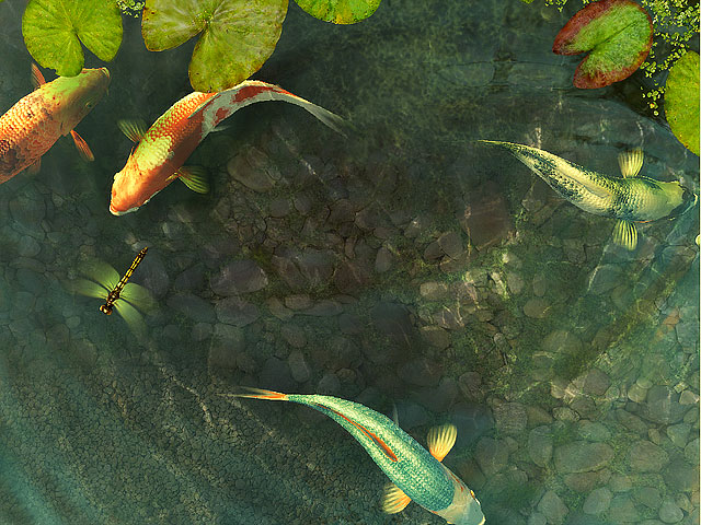 鲤鱼 Koi Fish 3D Screensaver