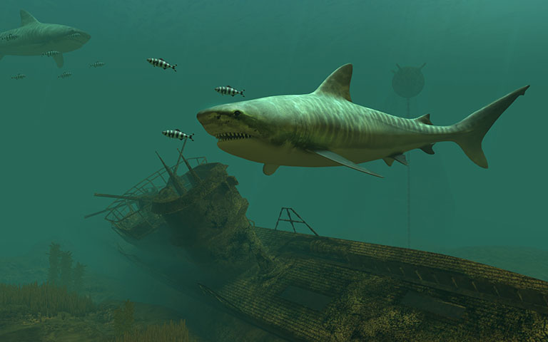 虎鲨 Tiger Sharks 3D Screensaver