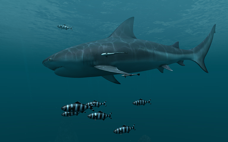 鲨鱼 Sharks 3D Screensaver